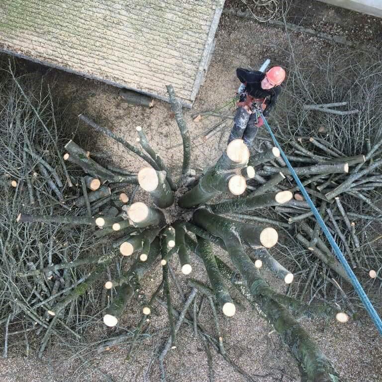 abattage arbre loiret