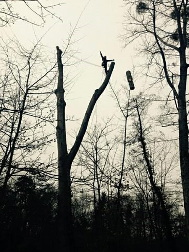 Abattage d'arbre tarif