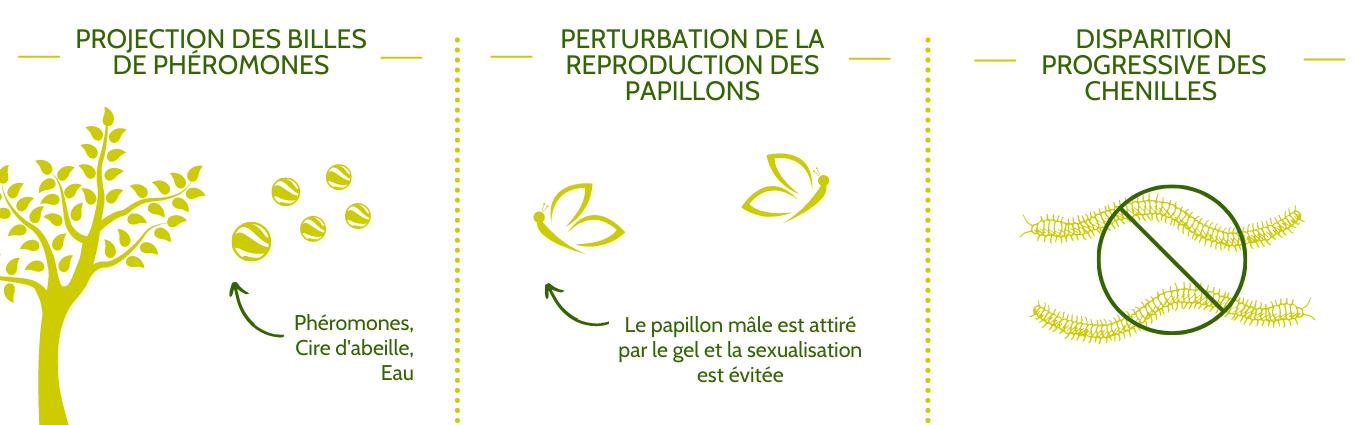 Le phéro-ball : un moyen naturel et afficace contre la chenille processionnaire du pin