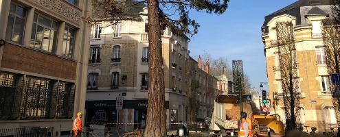 Abattage du Séquoia de la place Halmagrand à Orléans